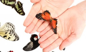 Beautiful butterfly on hands, isolated